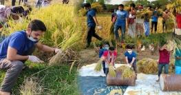কৃষকের ধানকেটে মাড়াই করে বাড়ি পৌঁছে দিল গাজীপুর মহানগর ছাত্রলীগ