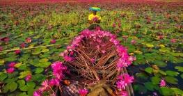 শাপলার রাজ্য সাতলা ভ্রমণের সকল তথ্য