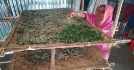 গাজীপুরের কাপাসিয়ায় রেশম চাষে স্বাবলম্বী হচ্ছেন নারীরা