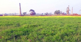 ইট ভাটা বন্ধ হওয়ায় সবুজের সমারোহ বিরাজ করছে গাজীপুর সিটিতে