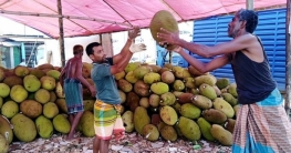 গাজীপুরের শ্রীপুরে কাঁঠালের বাম্পার ফলন, করোনার কারণে দাম নেই