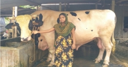 কোরবানির হাট কাঁপাবে সেই 'ভাগ্যরাজ'