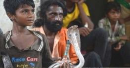 ভারতে সাপের কামড়ে 'দশ লাখের বেশি' মানুষের মৃত্যু