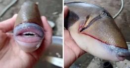 ধরা পড়ল অদ্ভুত মাছ : দাঁত, ঠোঁট মানুষের মতো