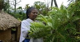 ওষুধি গাছ দিয়ে ৫০০ রোগ সারাতে পারেন এই নারী