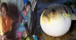 পটকা মাছ খেয়ে প্রাণ হারালেন বউ-শাশুড়ি