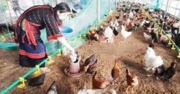 কালীগঞ্জে চায়না মুরগির খামার করে লাভবান এক দম্পতি