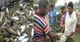 গাজীপুরের কালিয়াকৈরে দুই ঘণ্টার দেশীয় মাছের হাট
