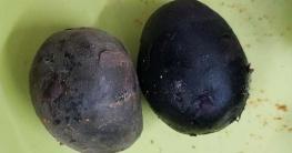 বাংলাদেশে নতুন প্রজাতির আলুর জাত `জিন আলু`