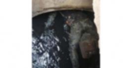 গাজীপুরের সাইনবোর্ড এলাকা থেকে অর্ধগলিত লাশ উদ্ধার