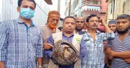 গাজীপুরে বঙ্গবন্ধু শেখ মুজিব সাফারি পার্কে বনরুই অবমুক্ত