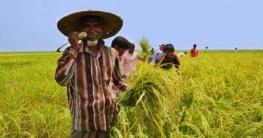 আধুনিক কৃষি প্রশিক্ষণ পাচ্ছেন ১৫ হাজার কৃষক
