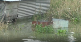সিরাজগঞ্জে পানি বৃদ্ধি অব্যাহত, তিব্র হচ্ছে নদী ভাঙ্গন