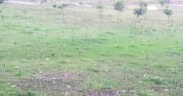 কালিয়াকৈরে প্রায় ৬ কোটি টাকা মূল্যের জমি উদ্ধার করেছে বন বিভাগ